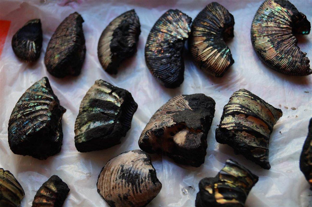 товары, фото названия окаменелости моллюсков себе рецепты