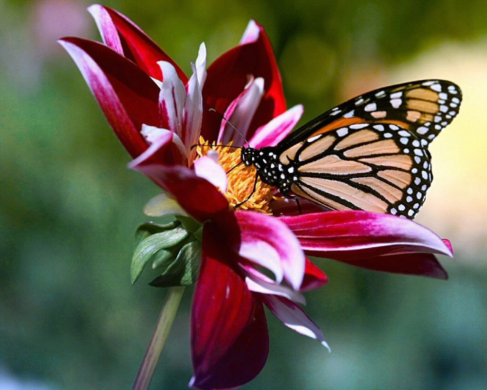 Flowers__and__Butterfly.jpg