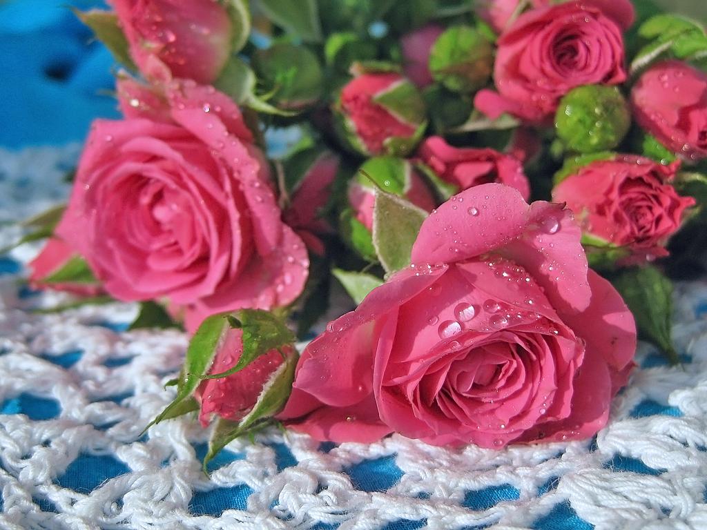 подскажите плиз, плейкаст самые красивые цветы большие открытки стал папой маленькой