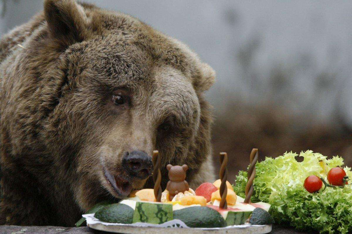 Летним юбилеем, открытка с медведем прикольная