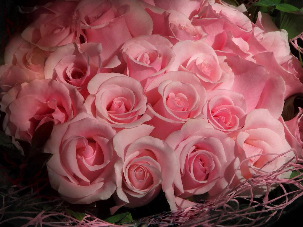 Фото одной большой розы время боевых