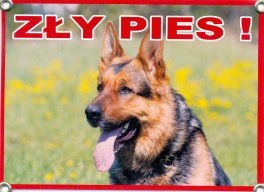 Zly Pies