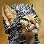 богатырский кот